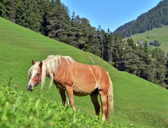 tiere-pferde-01