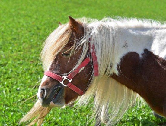 tiere-pferde-04